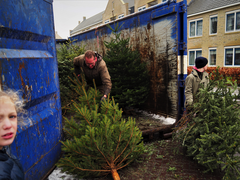 Kerstbomen-P1070013