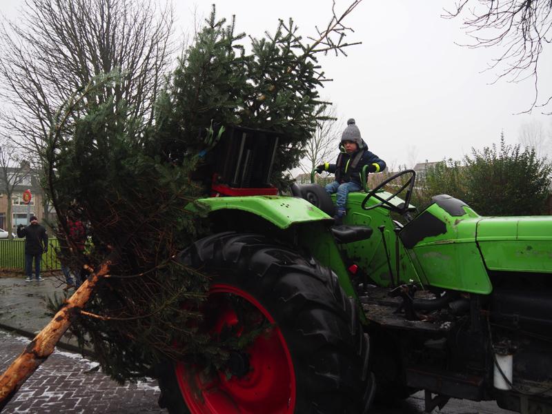 Kerstbomen-P1070061